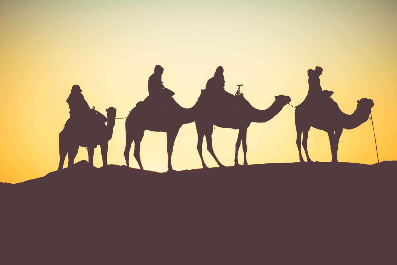 Sleep Under the Stars | Camel Tour
