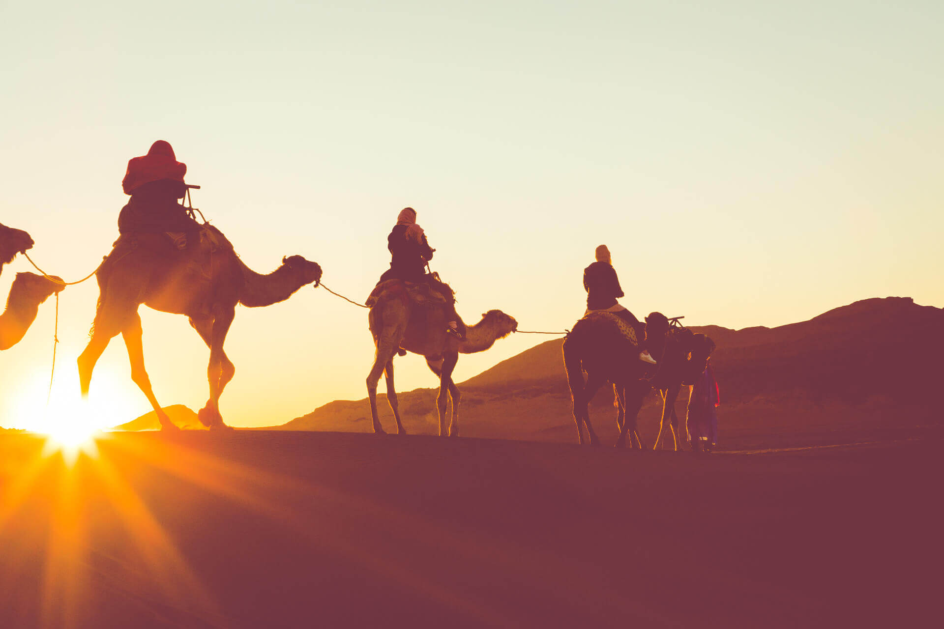 Camel Ride [ 1 / 3 h / Sunset ]